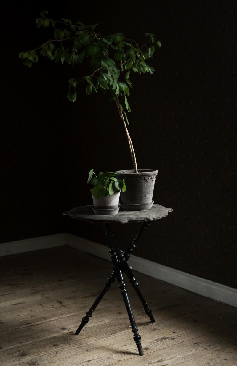 Stajla med växter